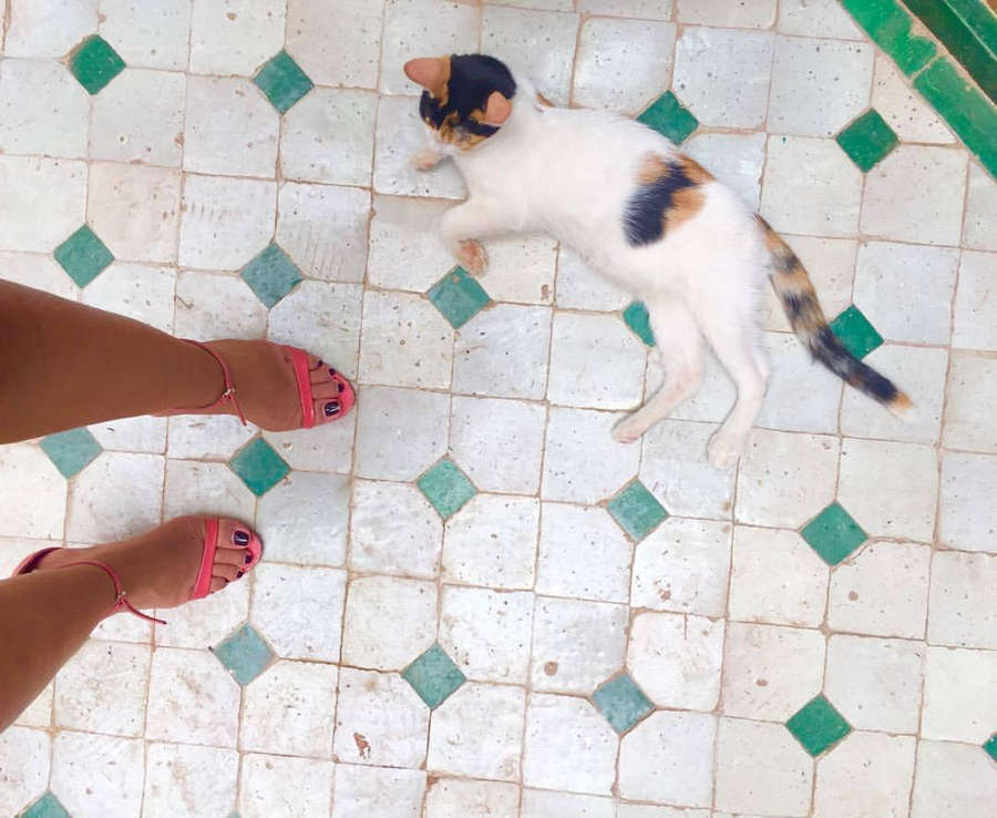 Alia Chergui Feet