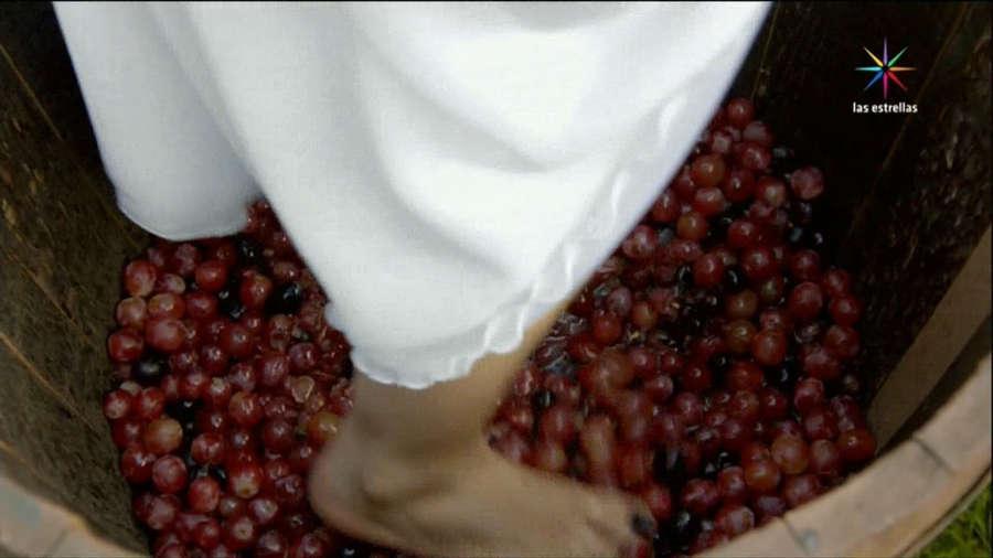 Sofia Castro Feet