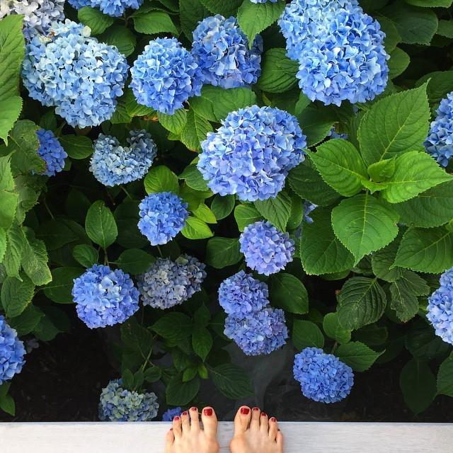 Maya Kazan Feet